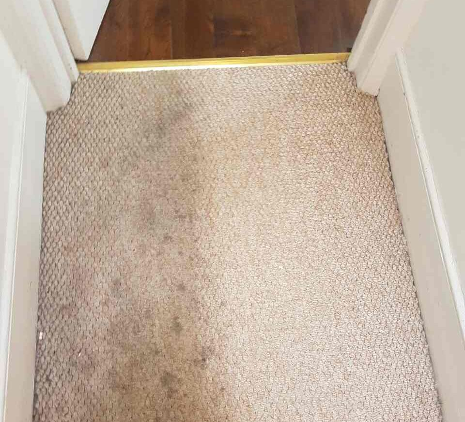 Carpet Cleaning Leatherhead KT22 Project