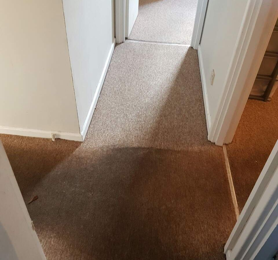 Carpet Cleaning St James's SW1 Project