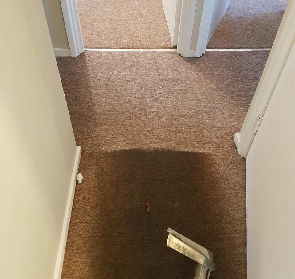 Carpet Cleaning Hyde Park W2 Project