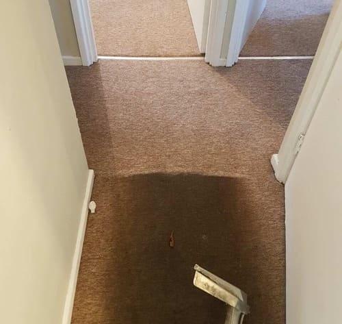 Carpet Cleaning Alperton HA0 Project